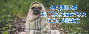 Alquilar Autocaravana con perro