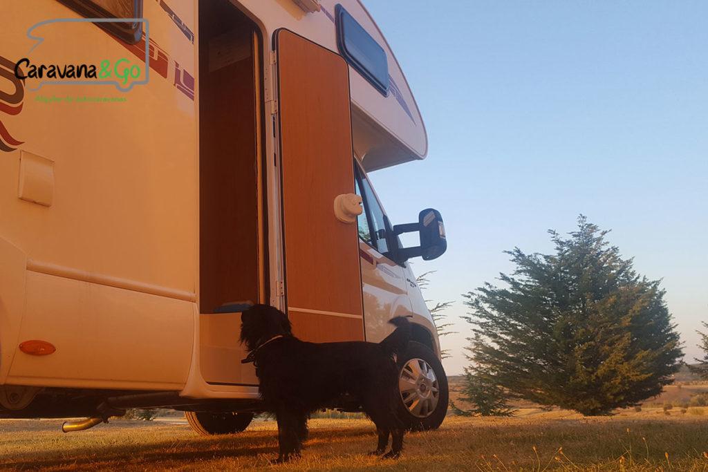 viajar con perro en Autocaravana